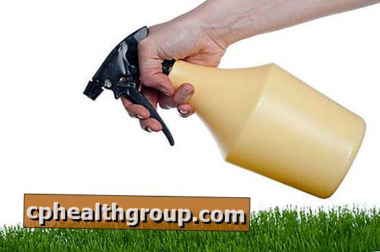 Kā veikt dabiskus insekticīdus